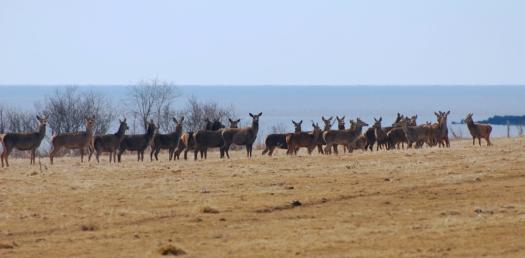deer_community