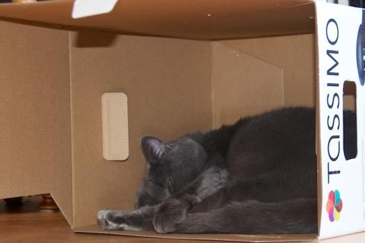 box_cat