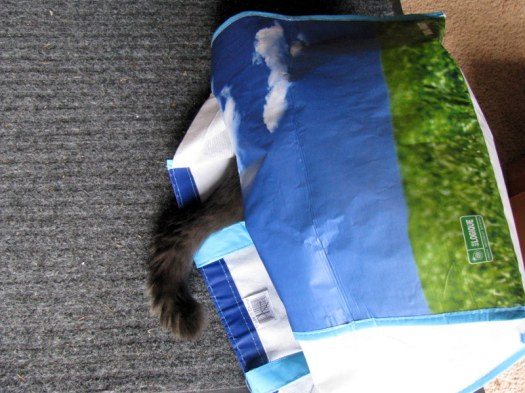 catsinthebag
